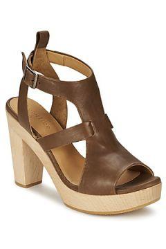 Sandales Coclico SHAE(98742326)