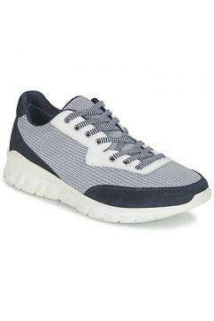 Chaussures Paul Joe REPPER(115449589)